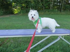 Cubby practices agility