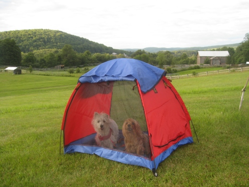 Camping at Glen Highland Farm