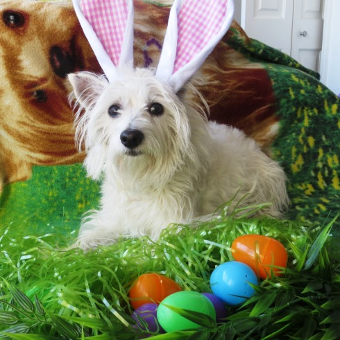 Cubby gets ready for Easter