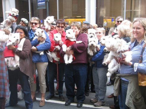 Westies ready to march in the Tartan Day Parade
