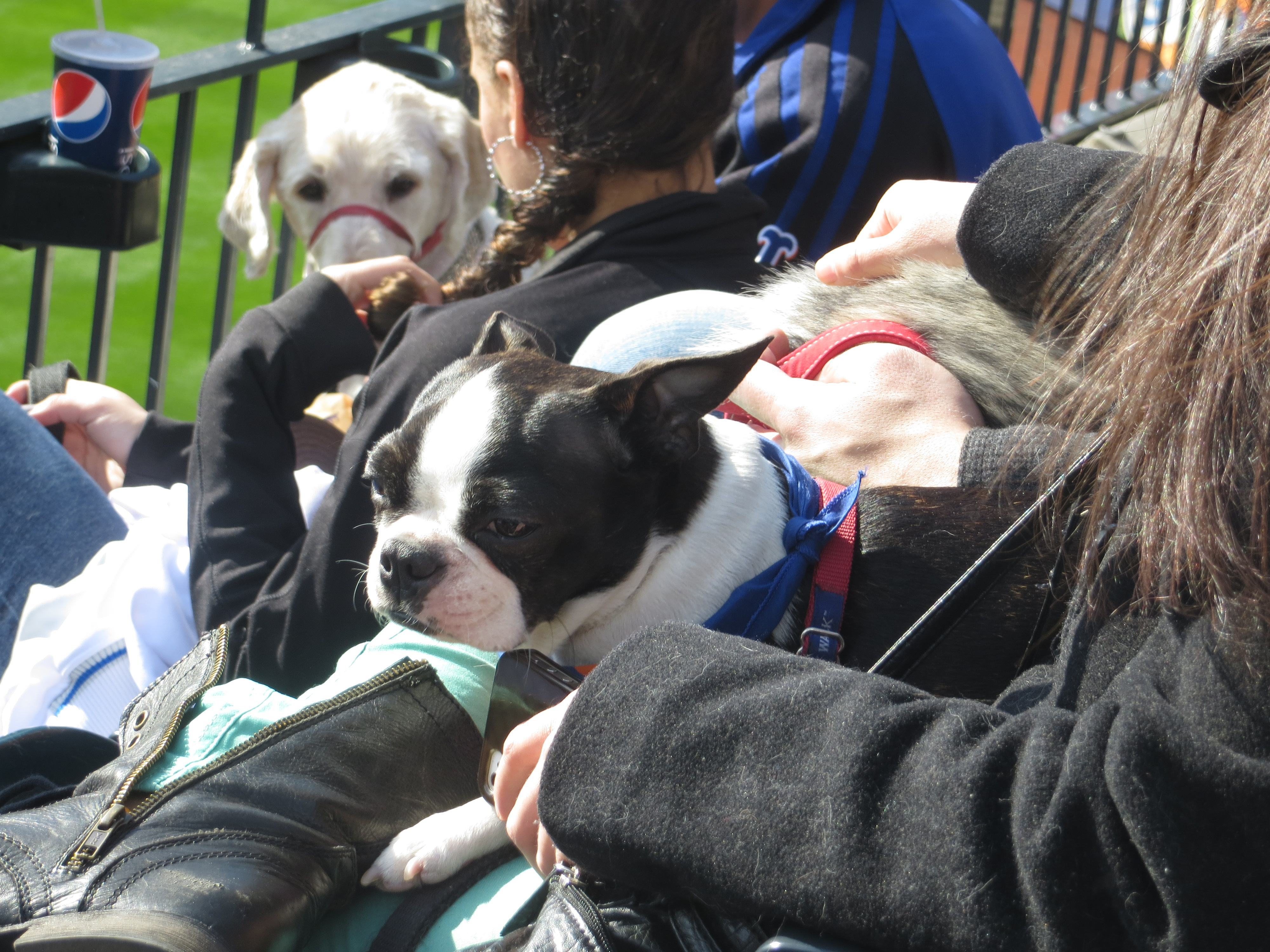 Bark In The Park With The Mets At Citi Field Thepupdiary