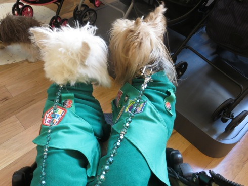 Our Pup Scout Uniforms