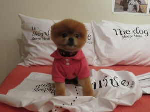 Tito will sleep tight!