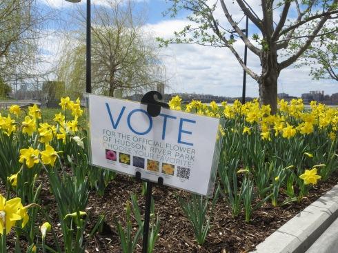Hudson River Park's Flower Contest