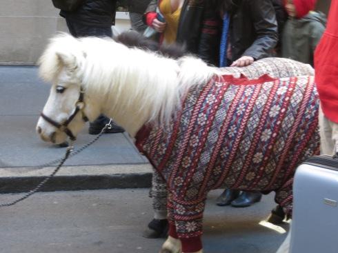 """Shetland Ponies """"Sweater"""" Ponies"""