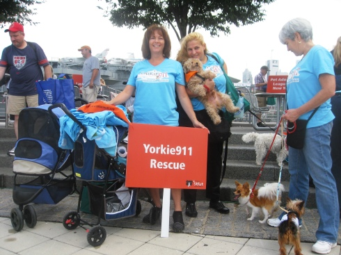 Yorkie Rescue Volunteers