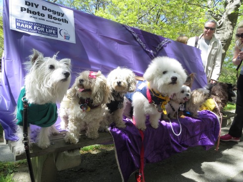 Pup Scouts at Bark for Life