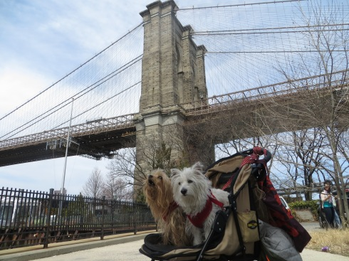 Visiting Brooklyn