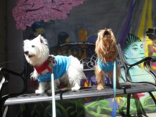Washington DC weekend dog-friendly getaway