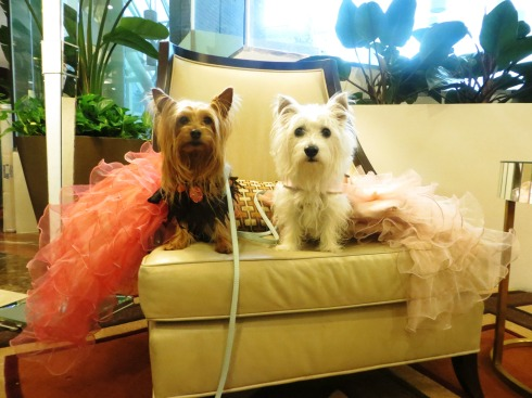 All dressed up at Blog Paws