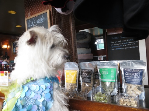 Shopping for treats at The Salty Paw