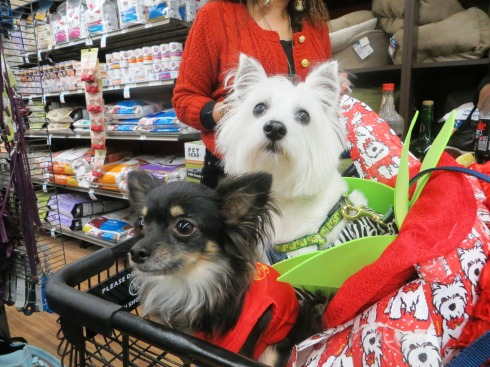 Shopping for treats at Unleashed by Petco