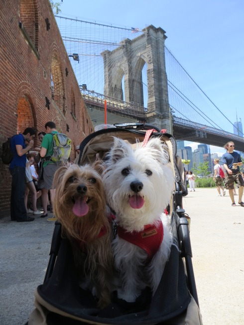 Smorgasburg at the Tobacco Warehouse welcomes pups