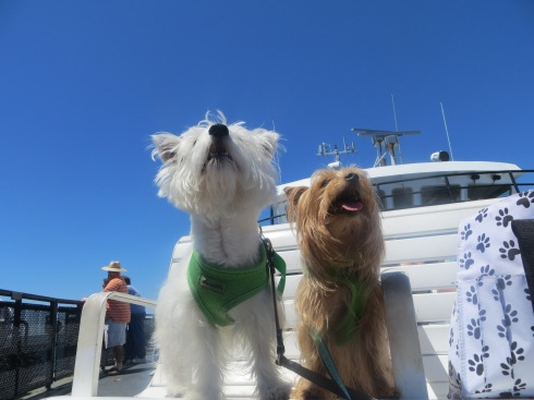 Beautiful blue skies on the ferry to Martha's Vineyard.
