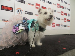 Celebrity Catwalk Paws in the City