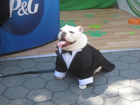 Sir Sleep helps promote P&G IAMS Dog Food