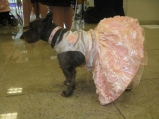 Puppy Prom - Our favorite gown by Tammy Peace