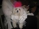 Puppy Prom 052