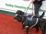 Bark in the Park Brooklyn Cyclones 006