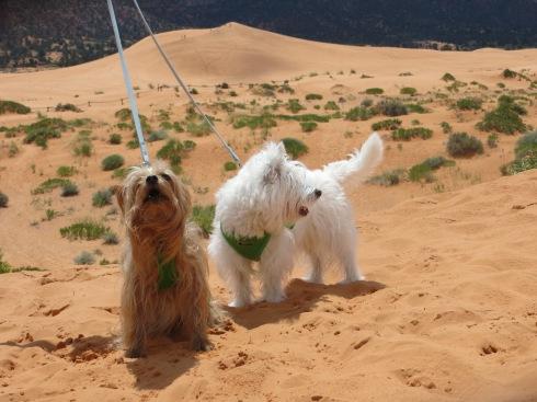Sand Dunes in Utah