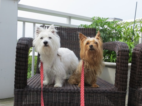 Dog-friendly patio at Inn by the Sea