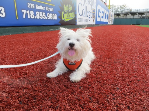 Bark in the Park with the Brooklyn Cyclones