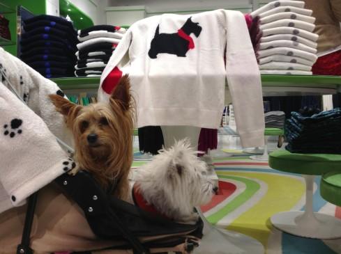 C Wonder terrier sweater