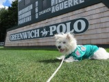 Greenwich Polo event 041