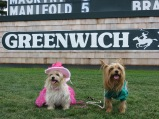 Greenwich Polo event 044