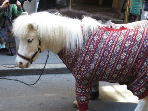 The famous sweater pony!