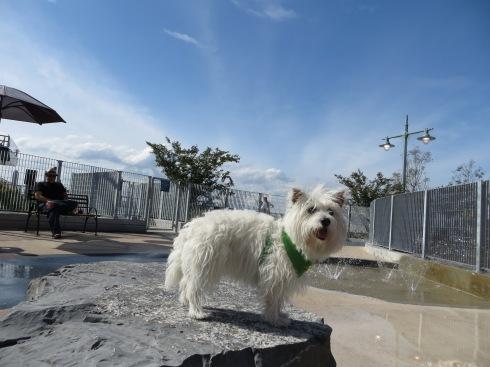 Tribeca Small Dog Run