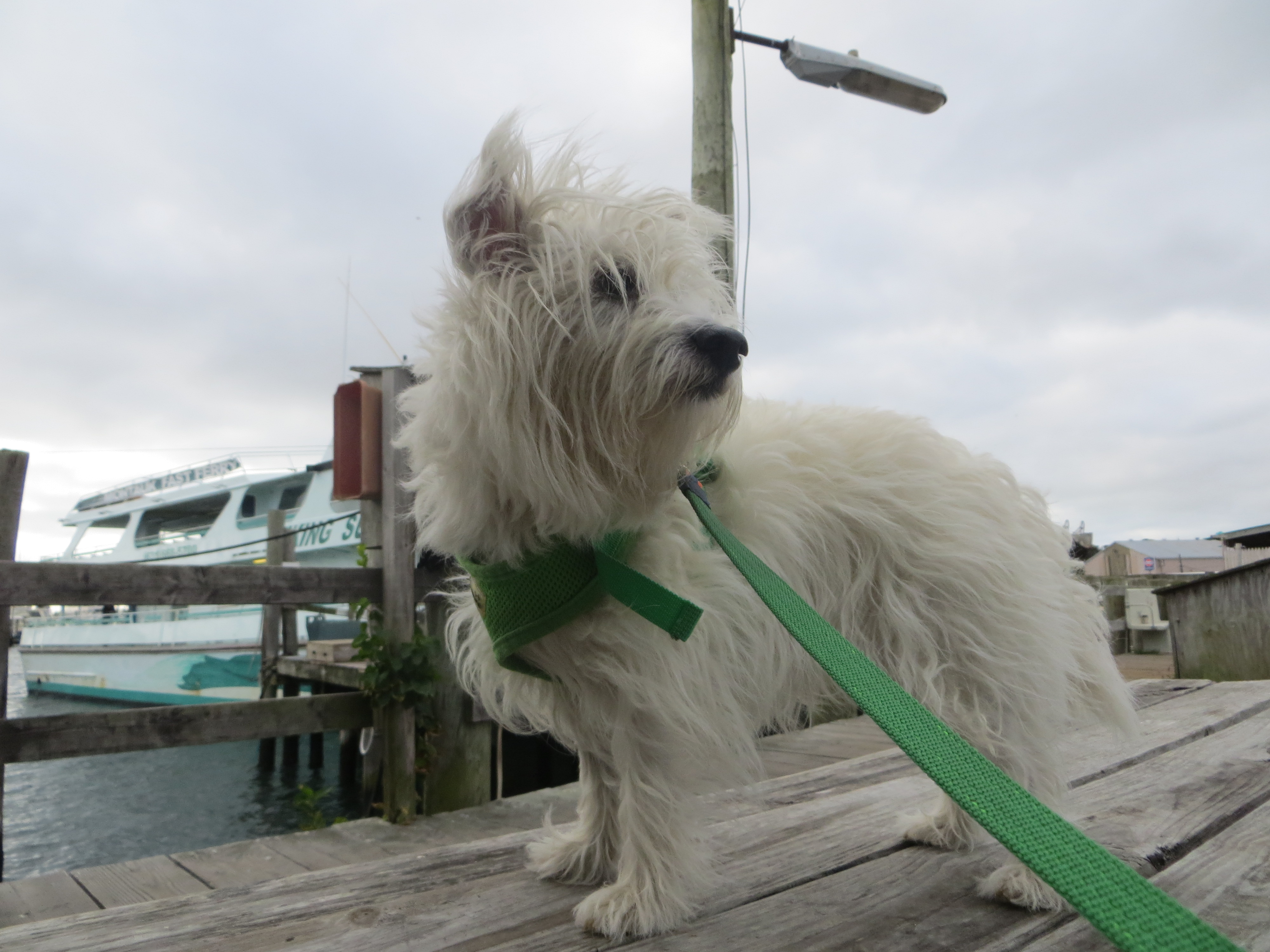 Block Island Ferry Dog Friendly
