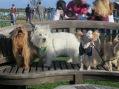 Pet News Now ARF Walk 155