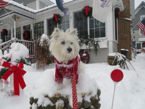 Vermont fun in the snow!