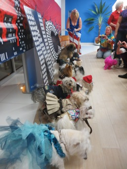 NY Pet Fashion Show 010
