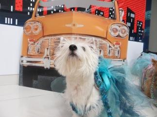 NY Pet Fashion Show 019