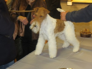 Sky wins at Westminster
