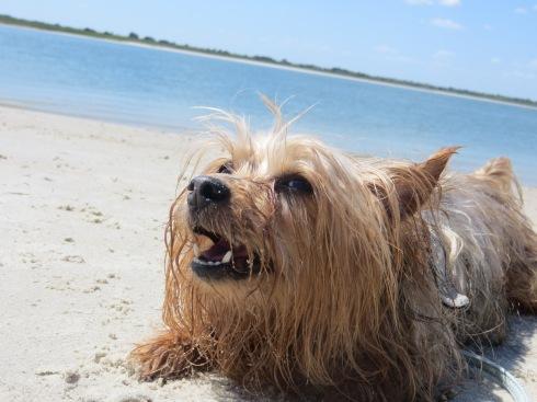 Smyrna Dunes Beach in Florida