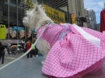 Doggie Diva Boutique