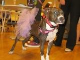 Love this - a pup in a tutu