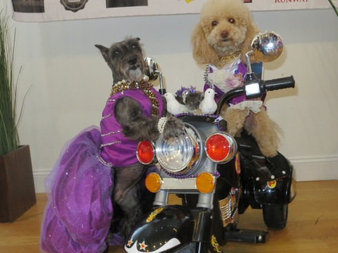 Lily and BB as Purple Rain